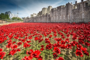 poppy_installation_4_august_copyright_rleahairhrp__32__-_low_res-